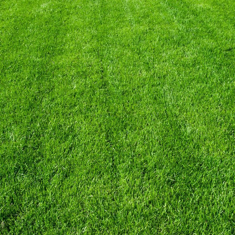 Green Grass Results From Lawn Applications Overland Park
