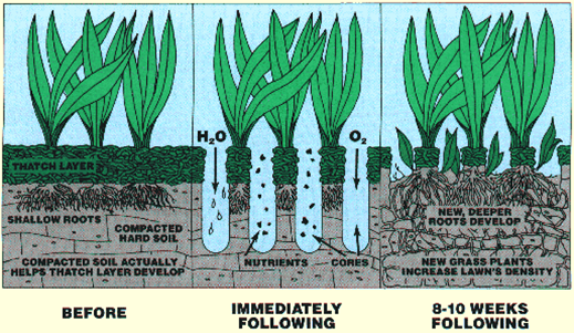 a cartoon image of lawn aerating in Overland Park