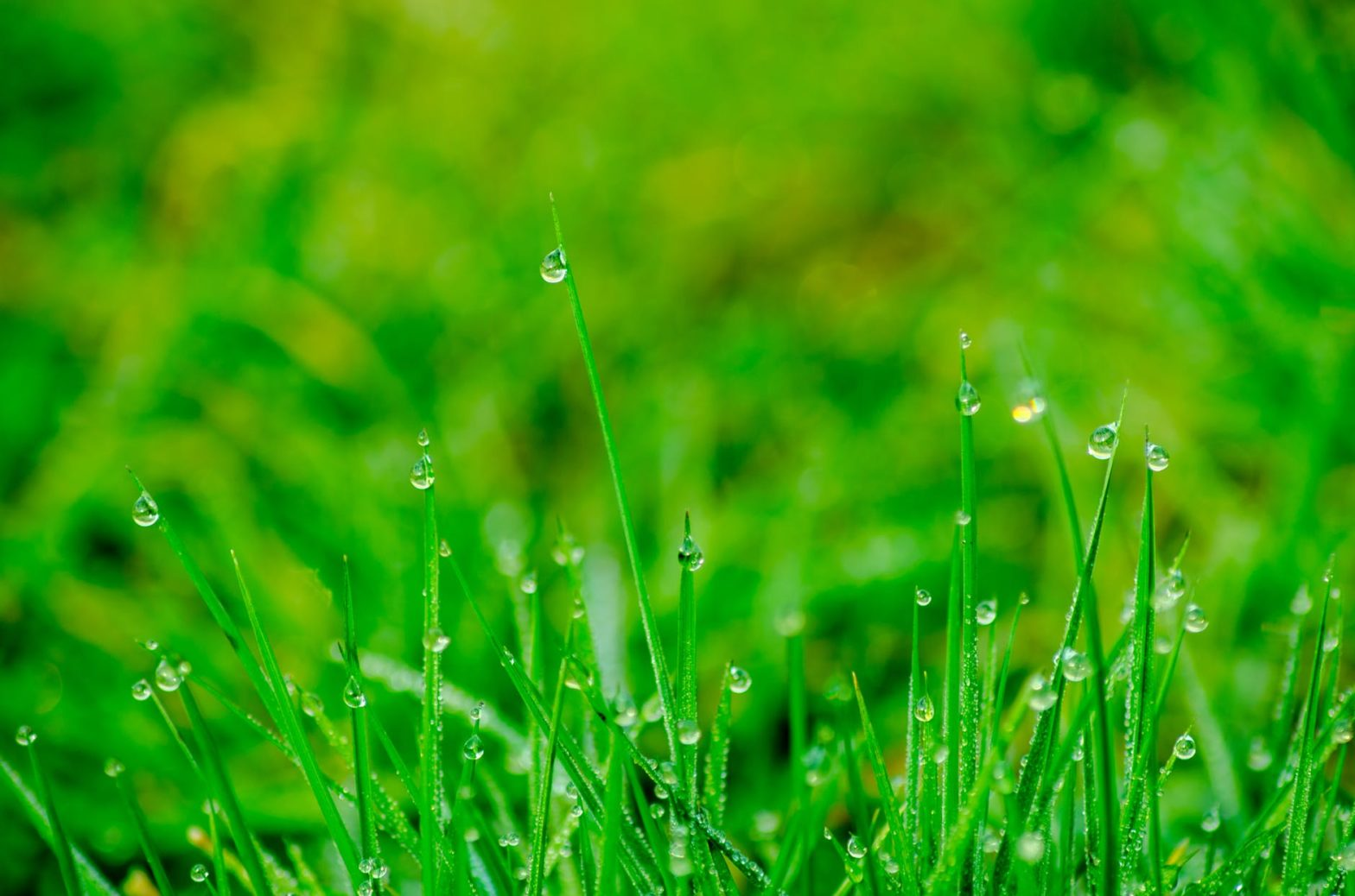 Watering Your Lawn During the Summer