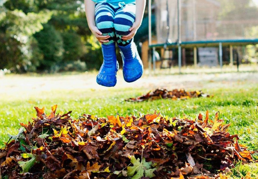 How to Prepare Your Lawn for this Fall